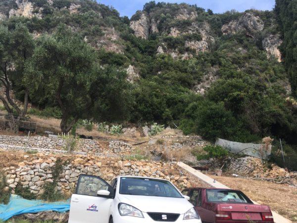 オリ-ブの木の下に駐車された車
