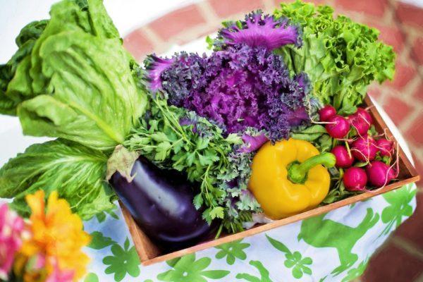 レタス・ナス・パプリカ・ラディッシュなどの野菜